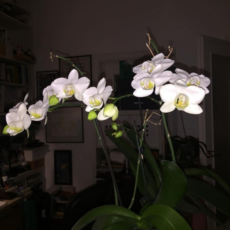 Too busy tidying in the terrace to remember to take photos, so here's that orchid again. Current score: 11
