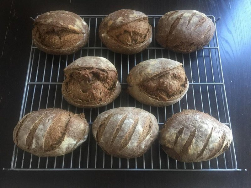 I realise I forgot to show off the finished black pepper rye sourdough loaves. So here they are.